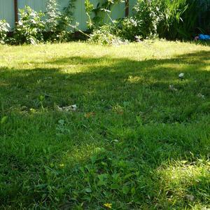 Мой маленький газончик