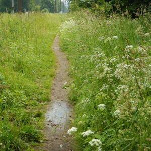 Тропинка в зарослях травы