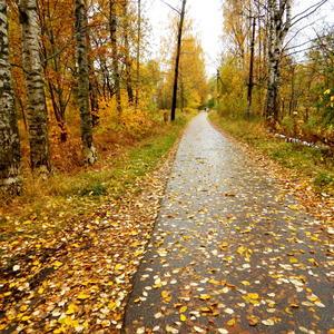 Осень печальная