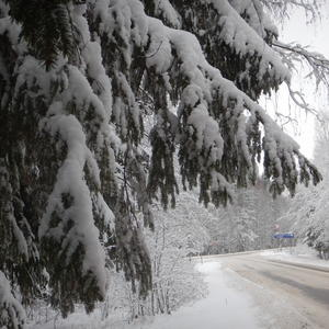 В снежную даль