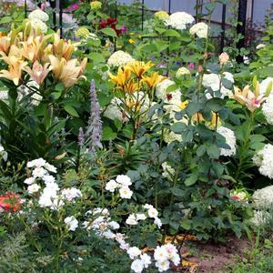 Трио: розы, лилии и гортензии