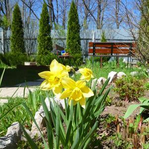 Весна в нашем саду