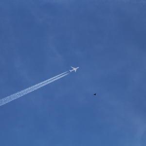 Наперегонки  с самолетом...