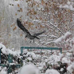 Первый снег в нашем саду