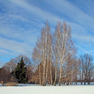 Снежок изрезан лыжами, как мел, скрипуч и сух...