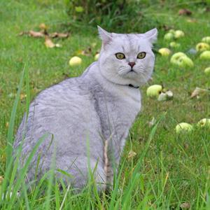 Кот в яблоках)