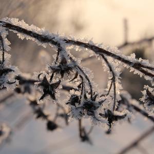 Зимняя малинка