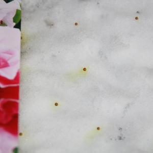 Петуния, посев на снег