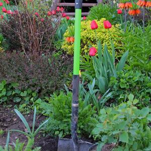 Когда лопата хороша - спорится дело и поёт душа... (Сажаю розу)