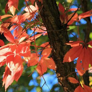 Разрядились в пух и прах осенью деревья...