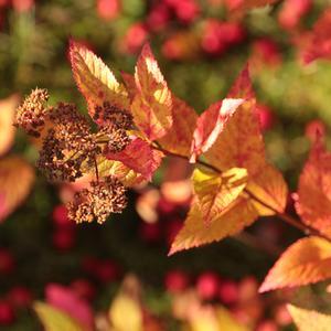 Порыжела листва, затянули дожди... это осень пришла, скоро зиму ты жди...