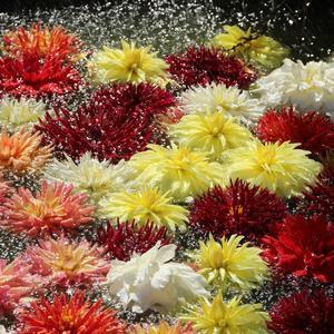 На их лепестки рассыпал дождь жемчуг, чтоб стали ещё прекрасней они...