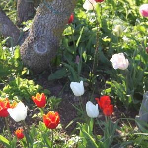 Наконец-то Весна!