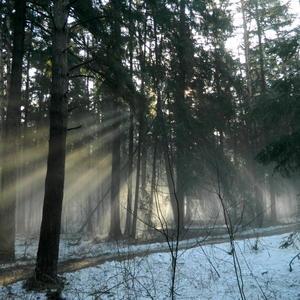 Солнечные лучики