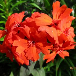 Самый яркий цветок в саду