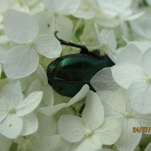 Зеленое на белом