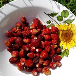 Все лето с ягодами