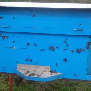 Пчелки вышли на облет