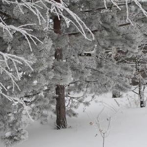 Деревья в моём саду