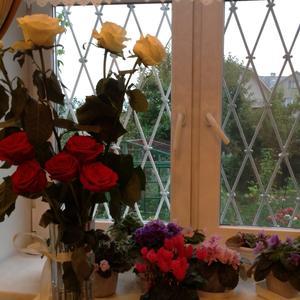 Цветы, везде цветы