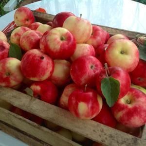 Яблоки Сорт Чудное
