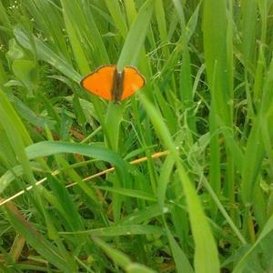 Бабочка в гостях у нас