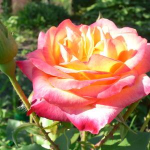 Розовые щёчки