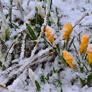 С надеждой на весну!