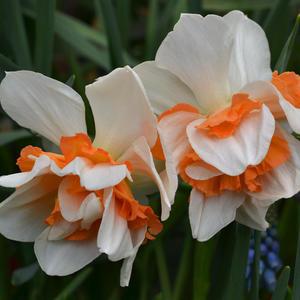 Счастье цветущей весны!
