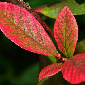 Осень на опушке краски разводила,  по листве тихонько кистью проводила...