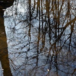 Отражение апреля в холодной воде лужи…