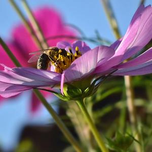 Пчелка в космосе