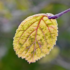 Листики желтеют, каждый год бывает, что в саду моем осень наступает…