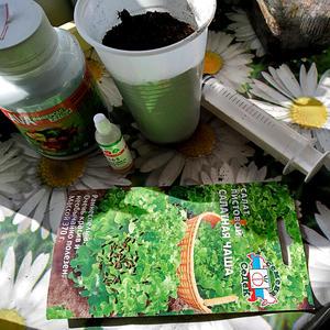 Салатик сейчас посажу, т.к. раннюю зелень очень люблю…