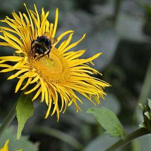 Купаясь в золотой пыльце, нектар я собираю и вижу, как, любуясь мной, ты втихаря меня снимаешь…