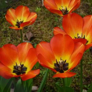 Как он красив – тот пламенный цветок! На длинном стебле горд и одинок...