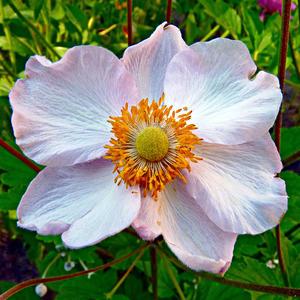 Космос - так в народе называют этот звёздный цветик-семицветик...