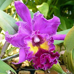 Восхищаюсь природы искусством, что создАла для нас орхидею, волю дав своим краскам и чувствам, мастерством в совершенстве владея.