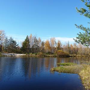 Пруд на территории нашего товарищества, в котором дачники с удовольстивием купаются и ловят рыбу...