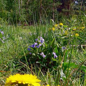 Весенние цветы на дачном участке...