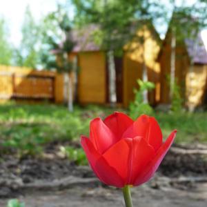 Ура!!! Весна на даче!!!