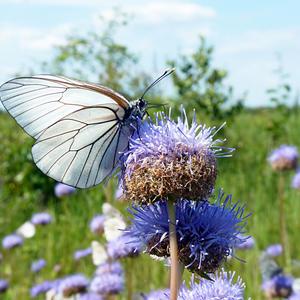 Бабочки порхают, бабочки...