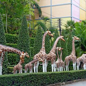 Удивительные жирафы встречают гостей...