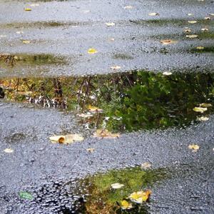 Осень в луже отражается...