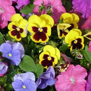 Разноцветное лето...