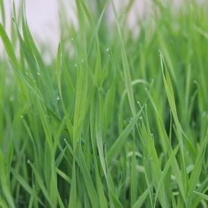 Первая майская зелень