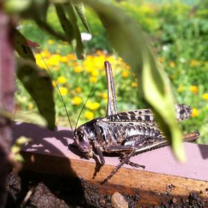 Невиданное доселе насекомое