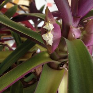 Скромное цветение...хорошо, что заметила)
