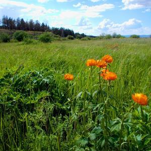 Клонит ветер к земле луговые цветы и травы
