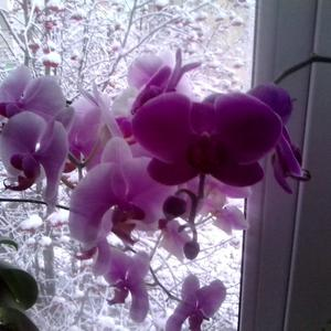 Цвет настроения... Фиолетовый!
